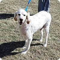 Adopt A Pet :: Will - Cameron, MO