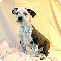 Adopt A Pet :: 17-d02-029 Journey - Fayetteville, TN