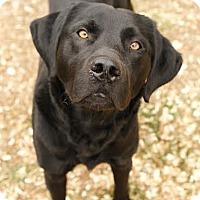 Adopt A Pet :: Piper - Camden, DE