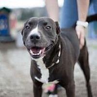 Adopt A Pet :: Delilah - Lewisburg, TN