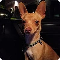 Adopt A Pet :: Memphis - Goodyear, AZ