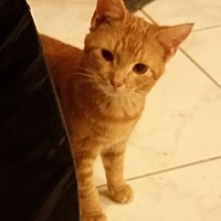 Adopt A Pet :: JJ - Orlando-Kissimmee, FL