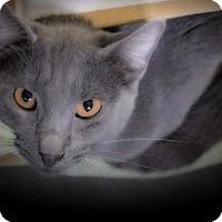 Adopt A Pet :: Grayson - Marion, IL