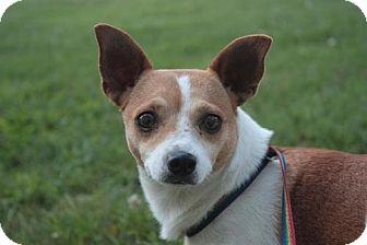Terrier (Unknown Type, Medium) Mix Dog for adoption in Stilwell, Oklahoma - Clover