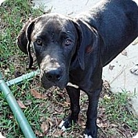 Adopt A Pet :: Shadow - Tallahassee, FL