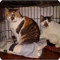 Adopt A Pet :: Angelina on right - Erie, PA