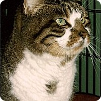 Adopt A Pet :: Pete - Medway, MA