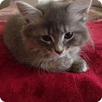 Adopt A Pet :: Floofers - Port Republic, MD