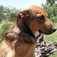 Adopt A Pet :: Conner - East Hartford, CT