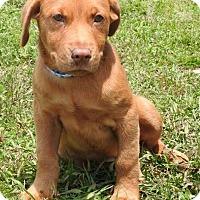 Adopt A Pet :: Leeroy - Gainesville, FL