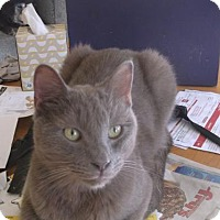 Adopt A Pet :: Dusty - el mirage, AZ