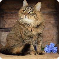 Adopt A Pet :: Fiona - Germantown, MD