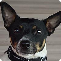 Adopt A Pet :: Ralphie - Manhattan, IL