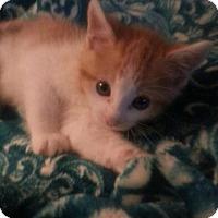 Adopt A Pet :: ARTHUR - Lawton, OK