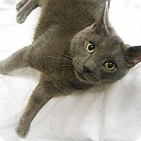 Adopt A Pet :: Triton - Maywood, NJ