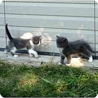 Adopt A Pet :: Cloudie - Washington Terrace, UT