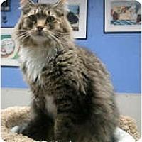 Adopt A Pet :: Teddy - Anchorage, AK