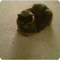 Adopt A Pet :: Shadow - Warren, OH