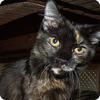 Adopt A Pet :: REBECCA - Acme, PA