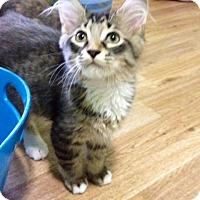 Adopt A Pet :: Pepe - Monroe, GA