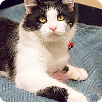 Adopt A Pet :: Billy - Chicago, IL