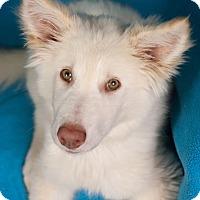 Adopt A Pet :: Dakota - Minneapolis, MN