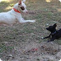 Adopt A Pet :: Peggy - Bartlett, TN