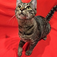 Adopt A Pet :: Lana - St. Charles, IL