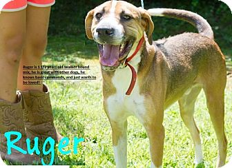 Hound (Unknown Type) Mix Dog for adoption in Broadway, New Jersey - Ruger