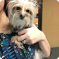 Adopt A Pet :: Chewy - Hazard, KY