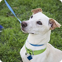 Adopt A Pet :: Kasia - Houston, TX