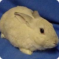 Adopt A Pet :: Maisy - Woburn, MA