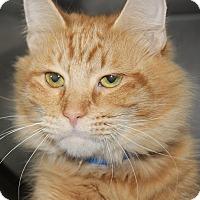Adopt A Pet :: BAILEY - Clayton, NJ