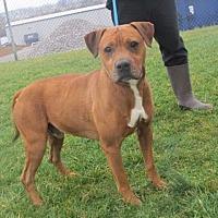 Adopt A Pet :: Martin - Richfield, WI