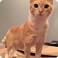 Adopt A Pet :: Scout - Columbus, OH