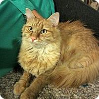 Adopt A Pet :: Oliver - Arlington, VA