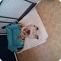 Adopt A Pet :: Percy - Denver, IN