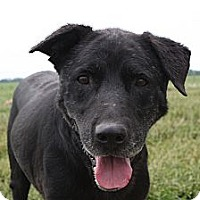 Adopt A Pet :: Freedom - Russellville, KY