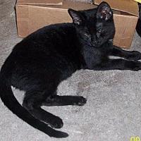 Adopt A Pet :: ALLEN - Morriston, FL