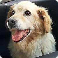 Adopt A Pet :: Freddie - BIRMINGHAM, AL