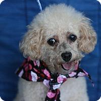 Adopt A Pet :: Tawny - Canoga Park, CA