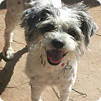 Adopt A Pet :: Bubbles - MEET ME - Norwalk, CT