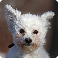 Adopt A Pet :: Muppet - Ile-Perrot, QC