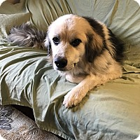 Adopt A Pet :: Murphy - Wethersfield, CT