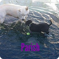 Adopt A Pet :: Parish - Brunswick, ME