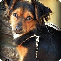 Adopt A Pet :: Rocco - Anaheim Hills, CA