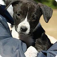 Adopt A Pet :: Oreo - Allentown, NJ