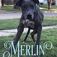 Adopt A Pet :: Merlin - Cheney, KS