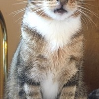 Adopt A Pet :: Toby - Pasadena, CA