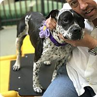 Adopt A Pet :: Cookie - beverly hills, CA